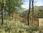 alligator fence 004_img